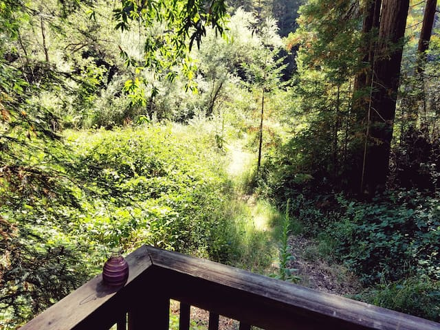 Back meadow/Path to creek