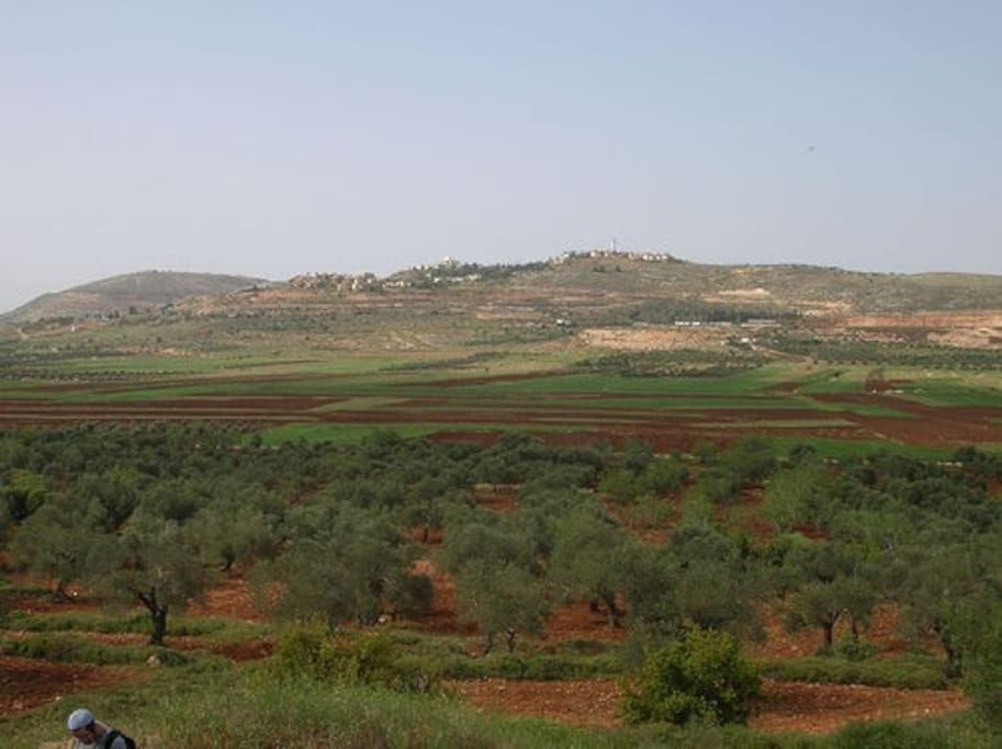 The community of Shilo from across the Biblical Shilo Valley