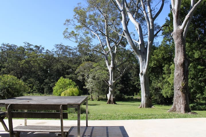 Three Gums in Wamberal