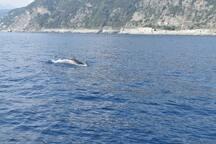 avvistati i delfini
