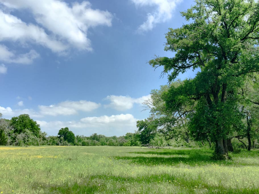 The pasture at Saving Grace Getaway. Take a blanket and have a picnic...the surrounding 10 acres are open for our guests.
