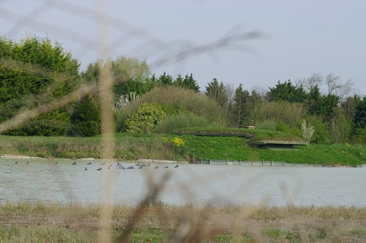 le marais du Nemrod nature,insolite,baie de Somme