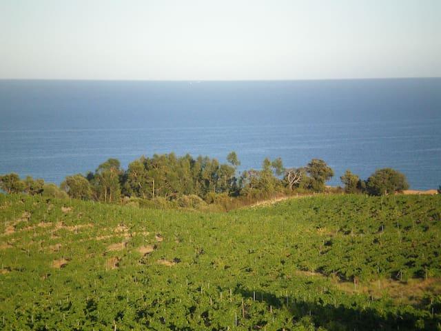 La villa SCOPPA - Sari-Solenzara - Dom