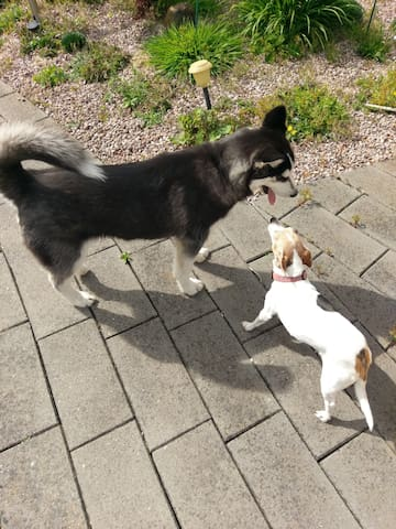 Ollie and Lucky