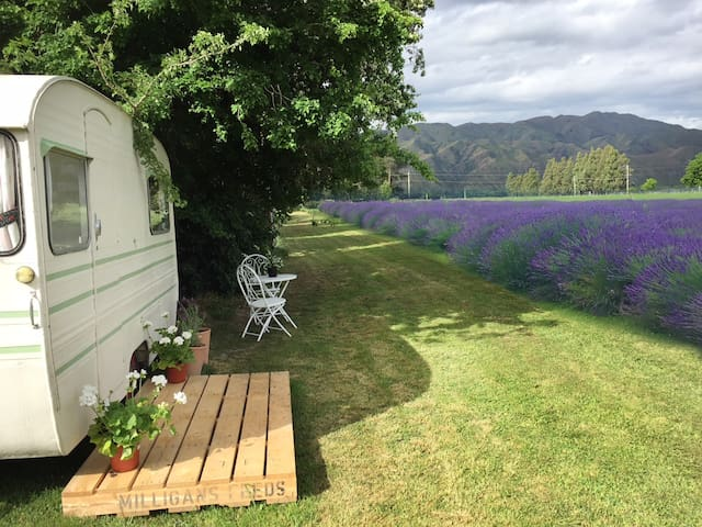 Betsy & Betty Eco Vintage Caravans- Lavender Farm
