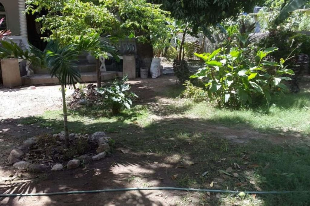Front yard filled with fruit trees with fruit for you to pick and eat