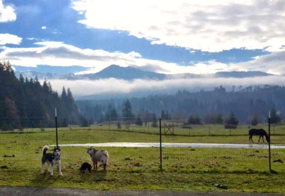 This is our pasture and view from the house.  There is a seasonal pond in the winter.