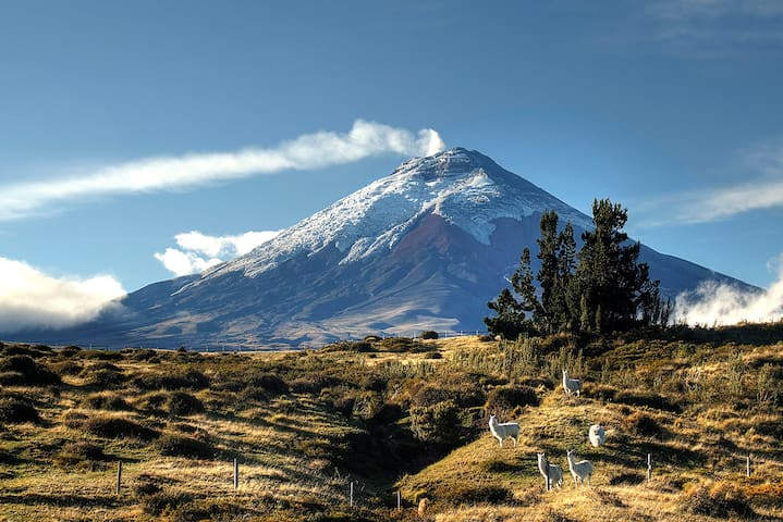 Adventure at Cotopaxi National Park - Quito - Bed & Breakfast
