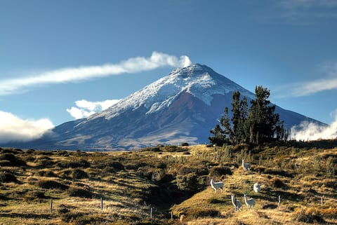 Adventure at Cotopaxi National Park