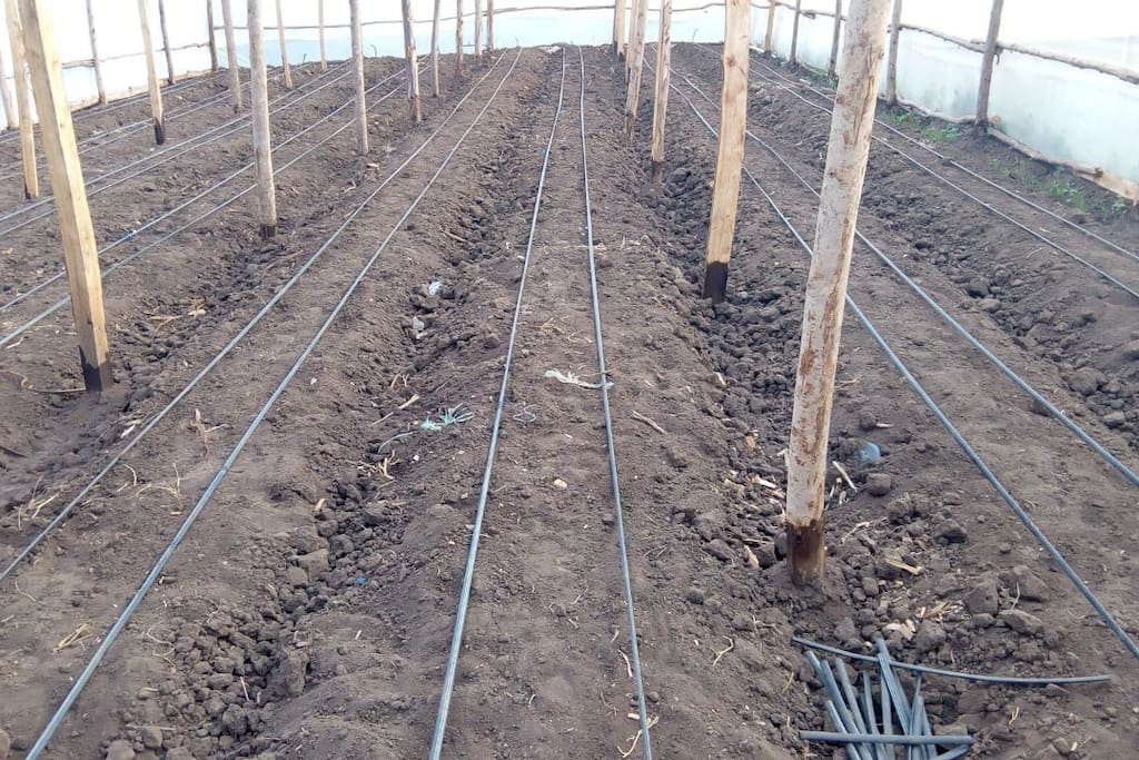 Guests can also joining us in tending to our greenhouse crops and also enjoy farm-fresh vegetables.