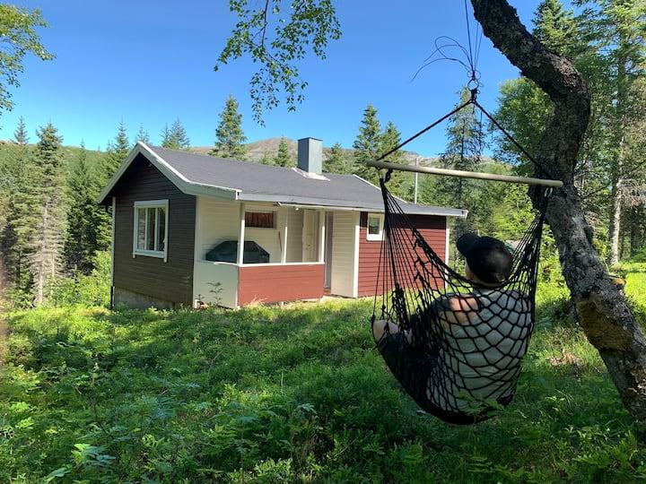 Sjarmerende liten hytte i Lofoten
