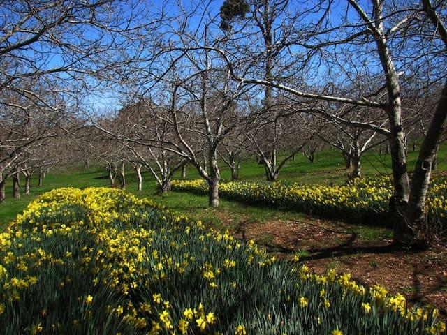 Chestnut Brae Farm Stay - Carlotta