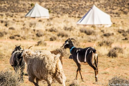 Bell Tent 2 Glamping on Navajoland - Page - Bed & Breakfast