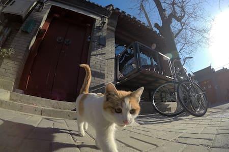 《街角》老北京胡同里的百年民宿