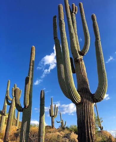 What to do in North Scottsdale/Cave Creek