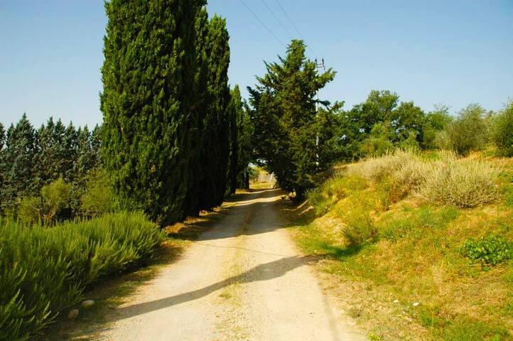 strada di accesso alla proprietà