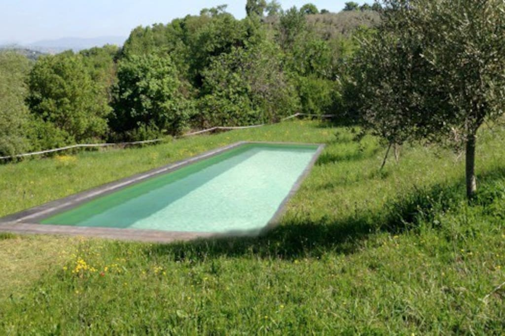 IMAGE of the new pool in olive field with views.