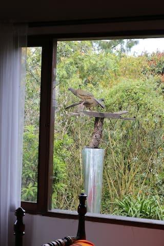 Gran variedad de pájaros que se acercan a la casa