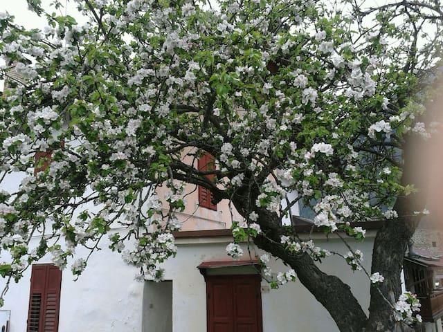 La casa del melo antico.Stanza privata accogliente - Ossana - บ้าน