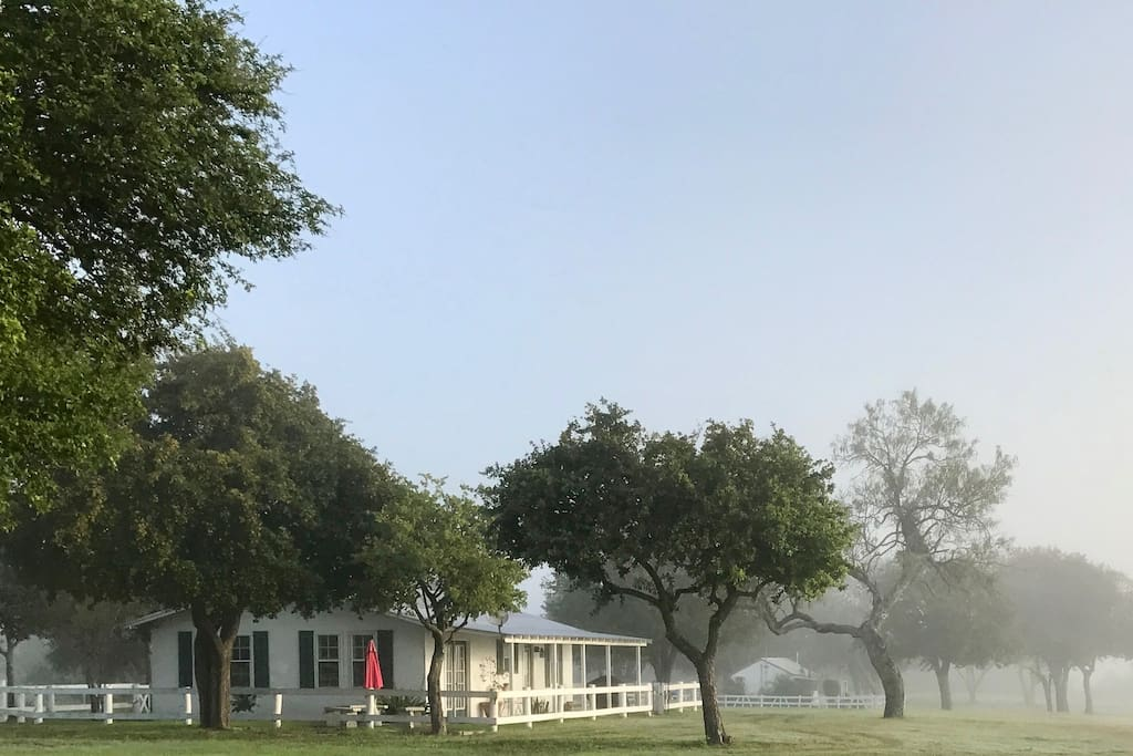 FOGGY SOUTH TEXAS FALL MORNING!