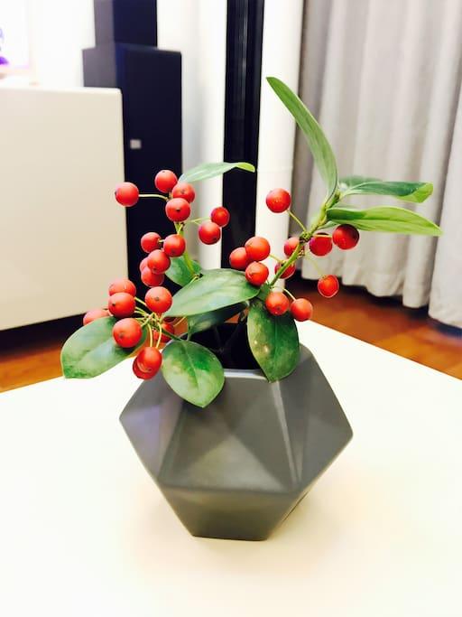 客厅小绿植