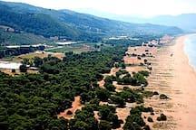 Η Ελαία, ο μικρός παράδεισος κοντά στην Κυπαρισσία, μια απέραντη χρυσαφένια αμμουδιά με πευκοδάσος στο σημείο όπου εκβάλλει ο ποταμός Νέδα.