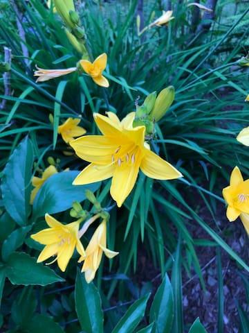 Fresh blooms in garden June 2019