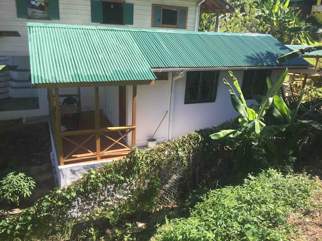 Tadpoles, Castara, Tobago