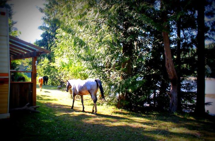 Trailer's Flow on Seaside Horse Farm