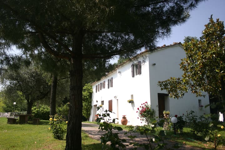 HOLIDAY IN COUNTRY HOUSE