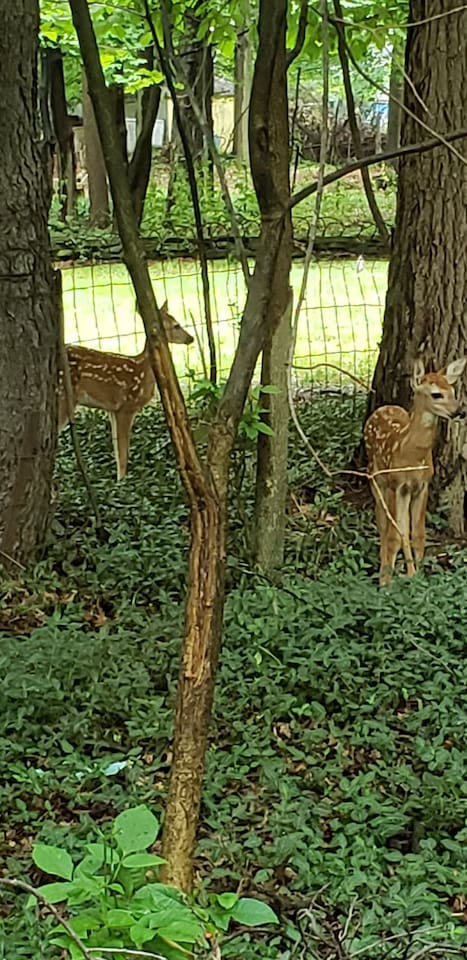 wildlife abounds here; please make sure no deer in the yard b4 releasing your dog to run; dont want to scare them; the yard is 'all animal' friendly.