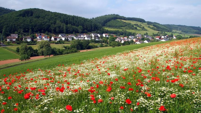 Flußbach Forrest - Pandura