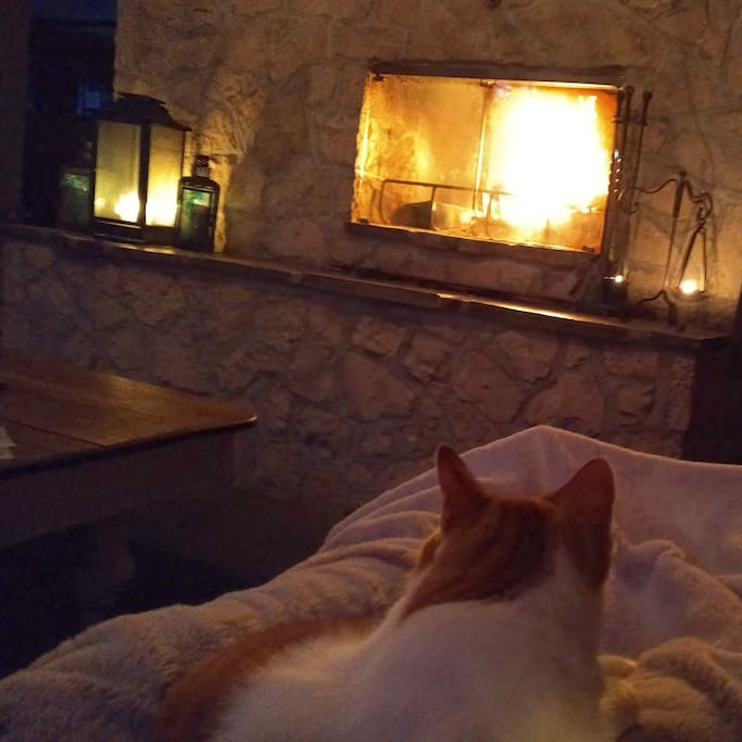 The Fire, and the Kitty