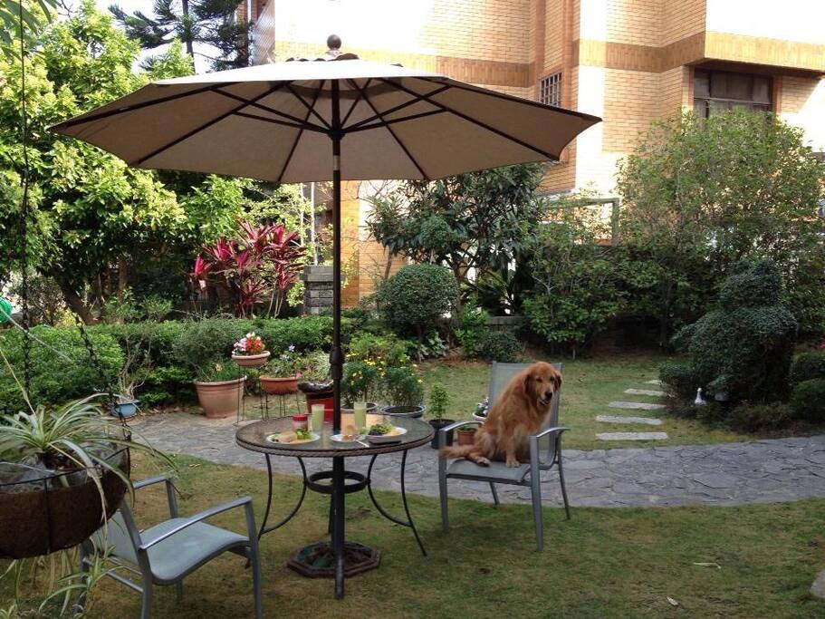The big garden  黃金愛犬伴相隨。