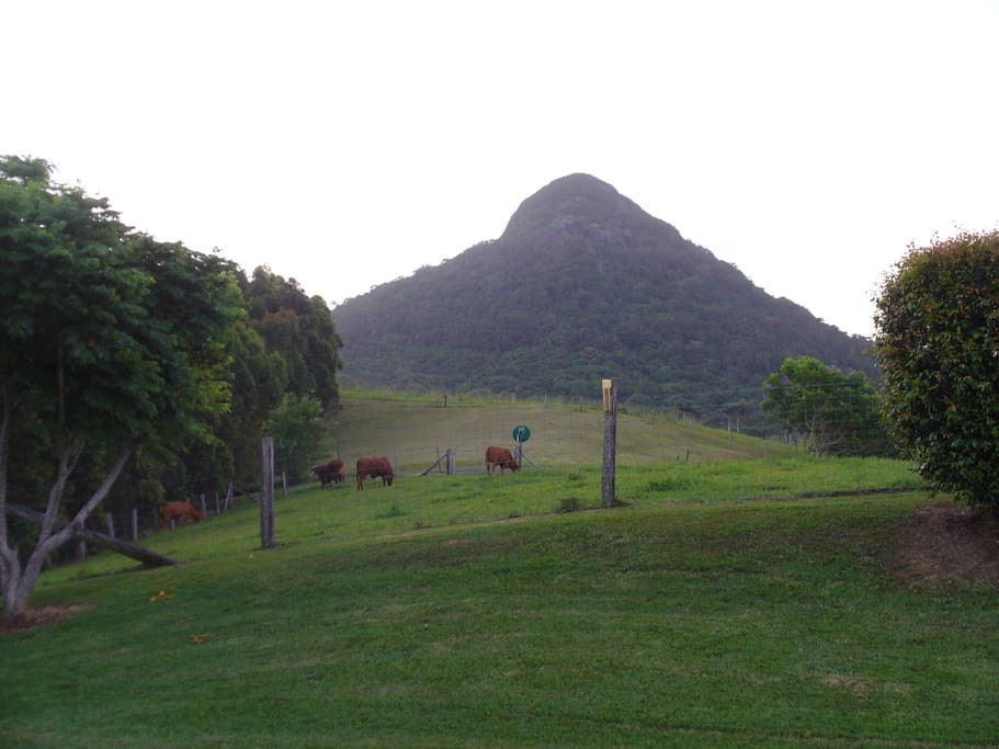 Mt Cooroy