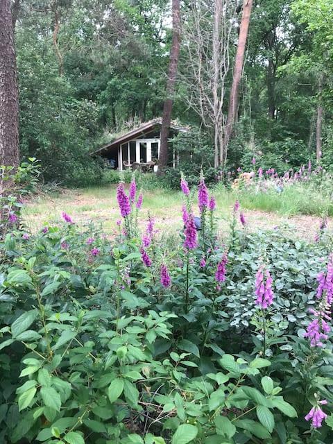 Romantisch boshuisje op de Veluwe.
