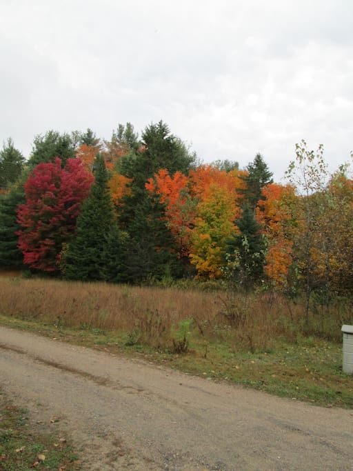 Fall Colours - Country Road
