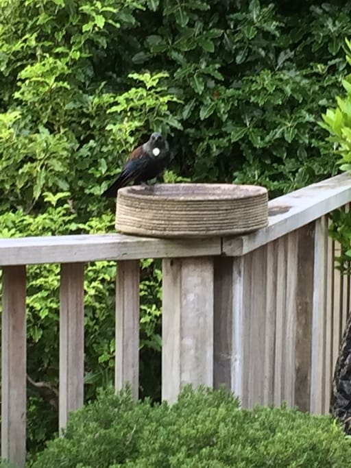 Tui on the deck