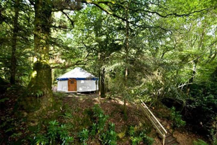 Unique Large Yurt in the Devon Woodlands