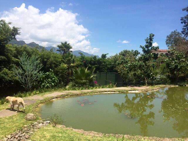 Jardín y cancha de padel