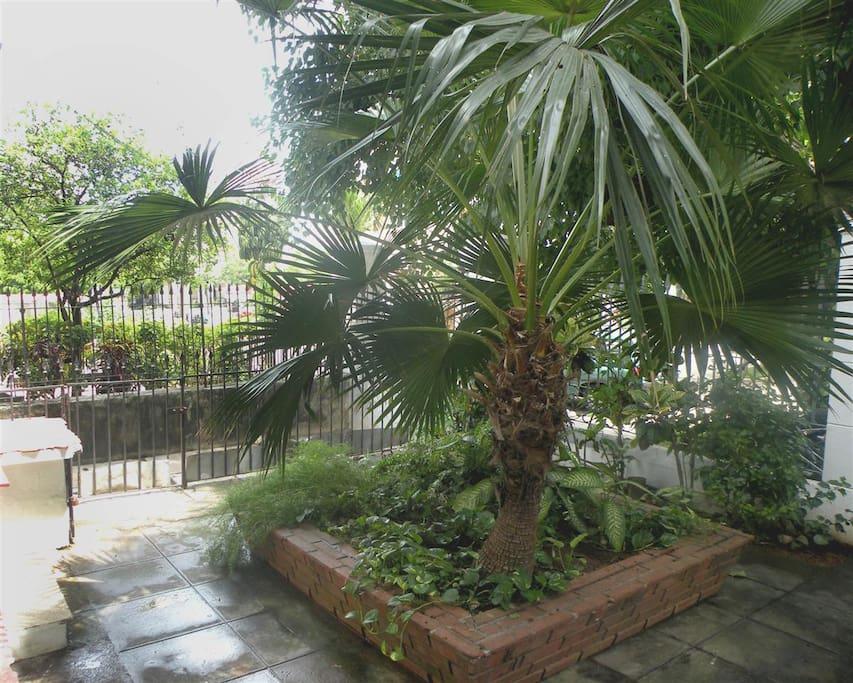 Este es el jardin de la casa colonial!!!