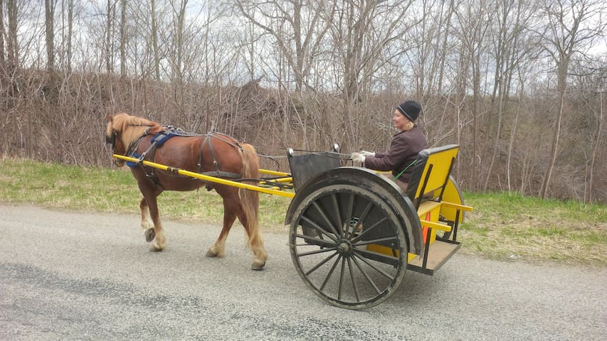 WINDY HILLS HORSE AND BUGGY COMPANY - Vienna - Bed & Breakfast