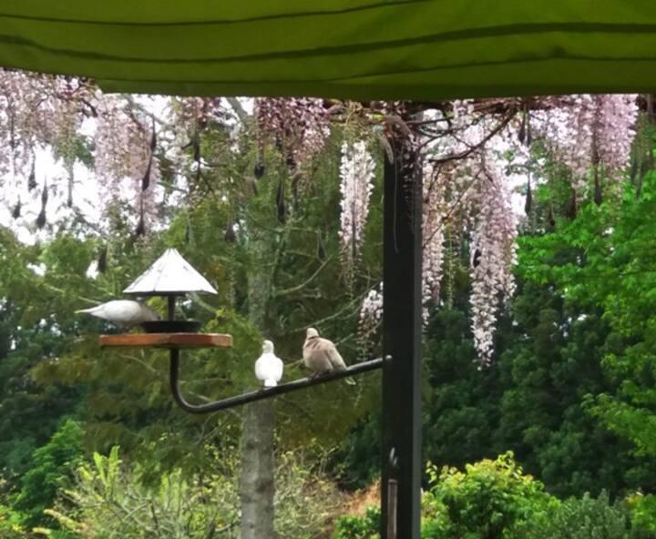Superb Garden with Breakfast on Sun Deck