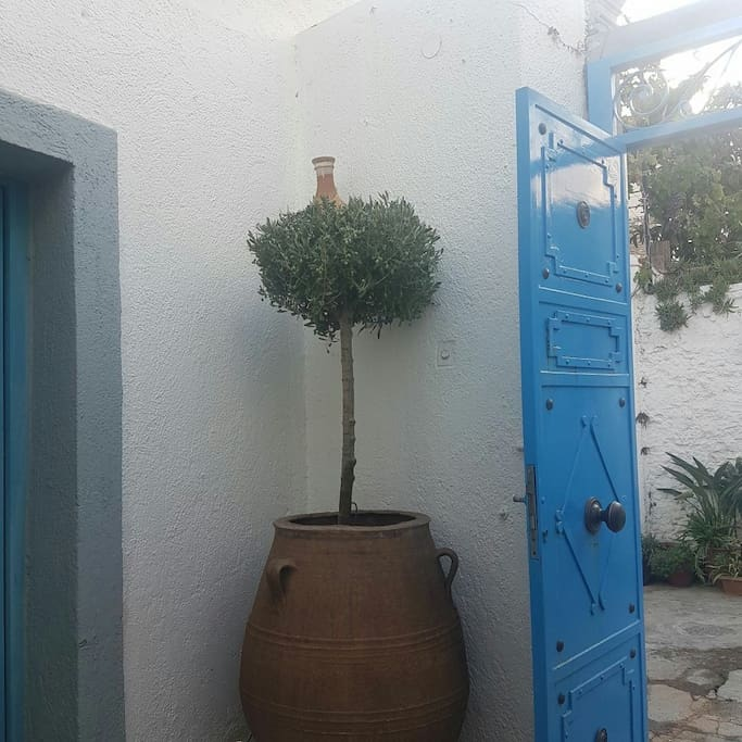 The entrance to the house and inside yard. The olive tree is typical of the greek culture.