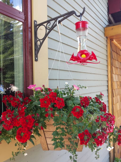 Pretty Spring blooms attracting humming birds.