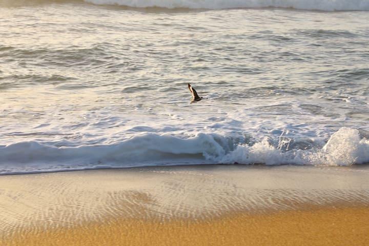 50sec Walk to Beach + 2 free Aquarium passes - Castroville - Complexo de Casas