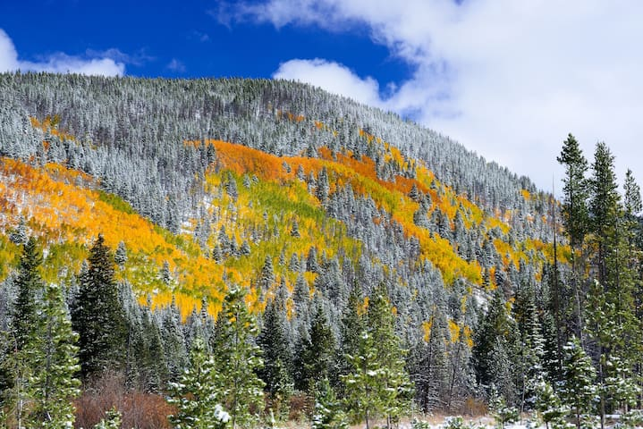 In the fall, witness the beauty of the changing aspen trees.