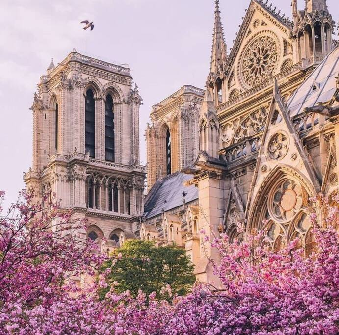 Appartement is 50 meters from Notre Dame