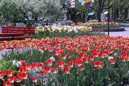 Holland Tulip Festival May 6-12 on Lake Bluff - South Haven - House