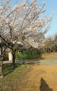 호리 펜션 캠핑장 - Palbong-myeon, Sosan - Panzió (Korea)